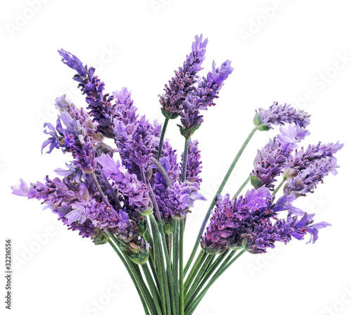 Photo lavender