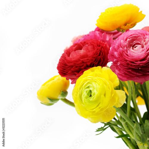 Obraz na płótnie Bouquet of colorful ranunculus