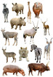 african animals collection isolated