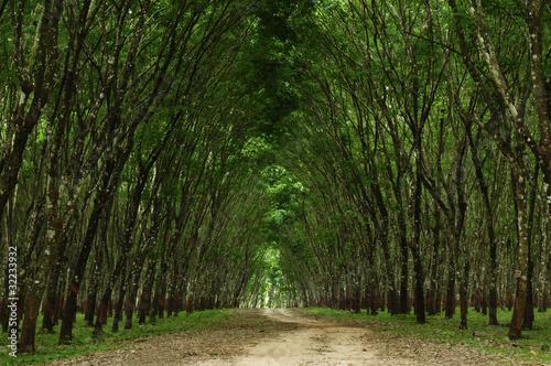Fotobehang Bossen Path in the green forest