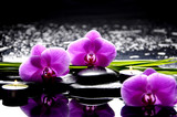 Fototapeta Storczyk - Spa still life with set of pink orchid and stones reflection
