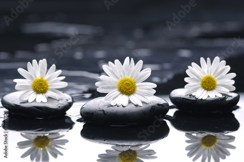 Foto auf Gartenposter Spa therapy stones and three marigold with reflection