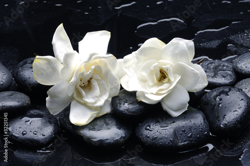 zdroju-wciaz-zycie-z-gardenia-kwiatem-na-otoczaku