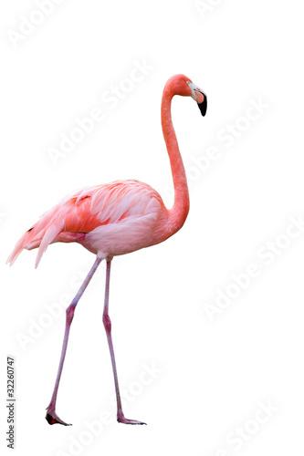 Cadres-photo bureau Flamingo Flamant rose
