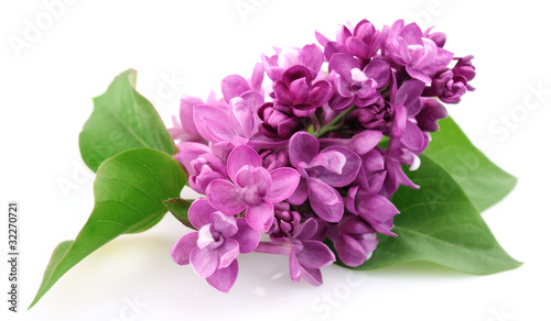 Photo sur Aluminium Lilac Spring lilac flower