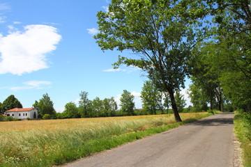 Fototapeta na wymiar Vento sul campo di grano,Castellazzo di Bollate-Milano