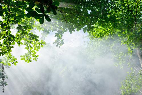 poranne-swiatlo-sloneczne-w-lesie
