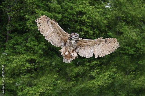 Stunning European eagle owl in flight Canvas Print