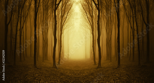 Fototapeten Wald path through a golden forest at sunrise