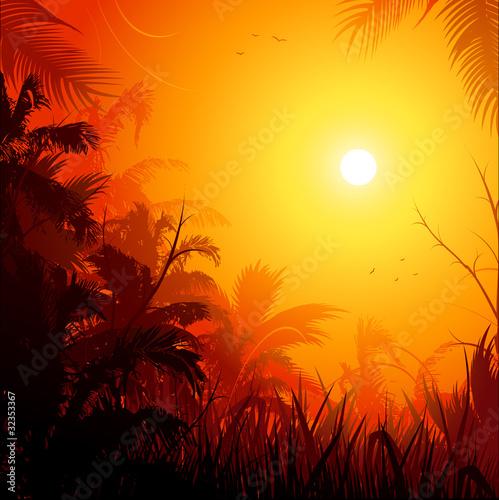 Jungle background at sunset #32353367