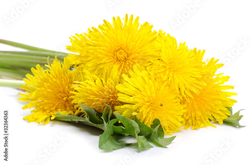 Fotografie, Obraz  Yellow dandelion isolated on a white