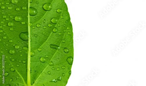 Fotografie, Obraz  drop on leaf