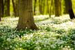 Waldboden im Frühling