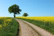 canvas print picture - tree path yellow rape canola field and blue sky