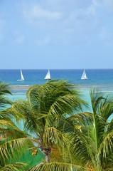 Panel Szklany Eko Caribean sea sailing and palm trees