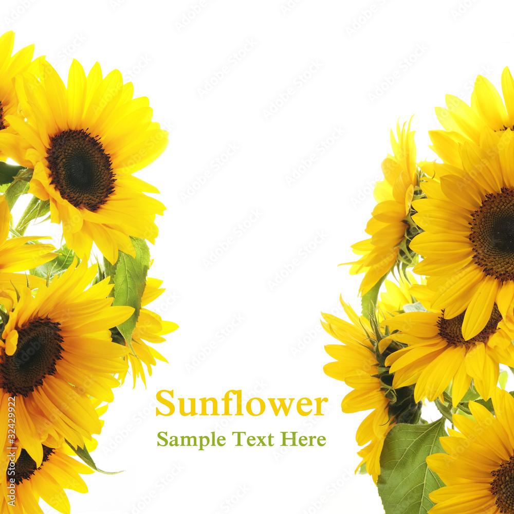 Sunflower frame on white background