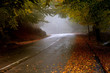 canvas print picture forest road