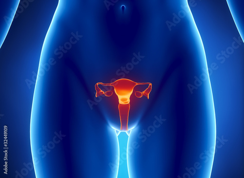 Fotografia, Obraz  Female REPRODUCTIVE system x-ray view