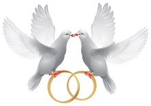 Wedding White Doves With Rings