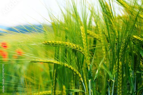 Foto-Kissen - Getreide (von Pixxs)