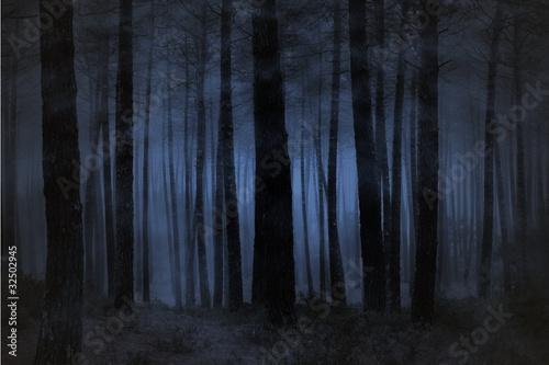 Papiers peints Forets Foggy forest