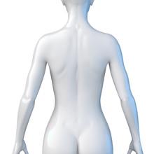 Weiblicher Oberkörper – Rü...