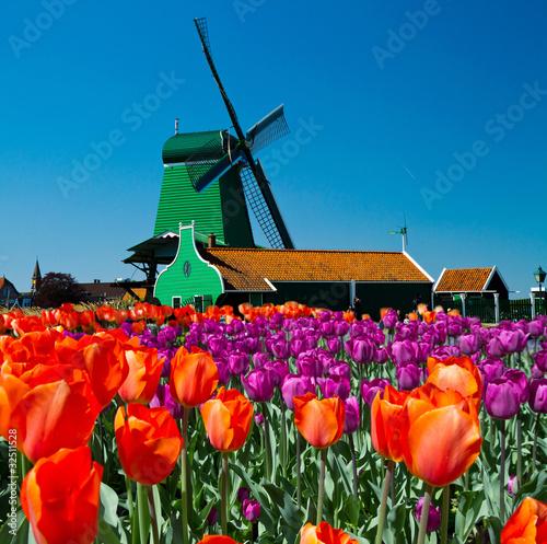 Plakat wiatrak w Holandii