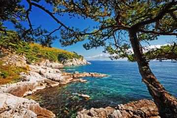 Panel Szklany Drzewa beautiful stone seashore