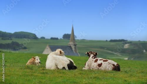 Poster de jardin Vache vaches normandes