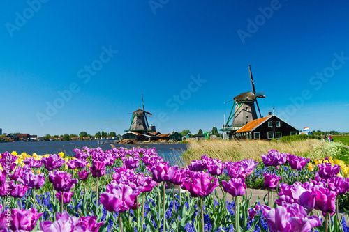 Foto-Schiebegardine ohne Schienensystem - windmill in holland