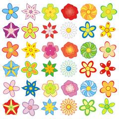 Paczka kolorowych kwiatów