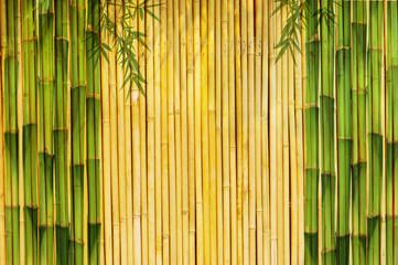 Fototapeta Bambus Light Golden bamboo Background