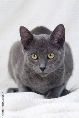 Papel de parede  Gato negro