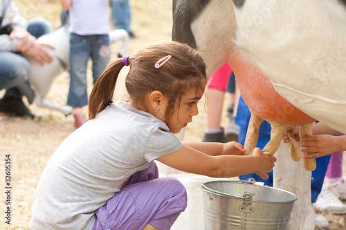 Fotografie, Obraz  Milking cow 4