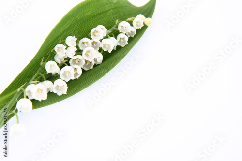 Staande foto Lelietje van dalen Lily of the valley flowers with a leaf on white background