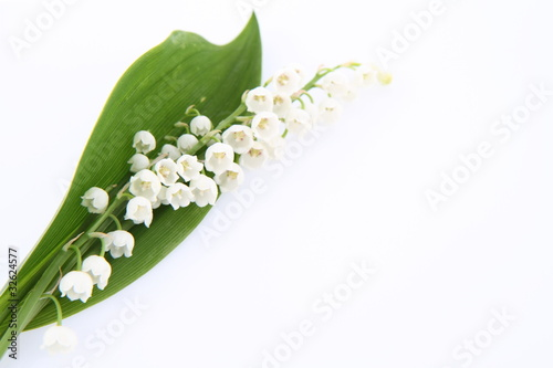 Foto op Canvas Lelietje van dalen Lily of the valley flowers with a leaf on white background