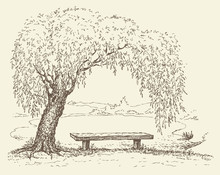 Old  Bench Under A Willow Tree By The Lake