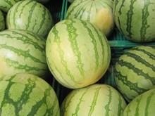 Striped Watermelon , Sandía R...