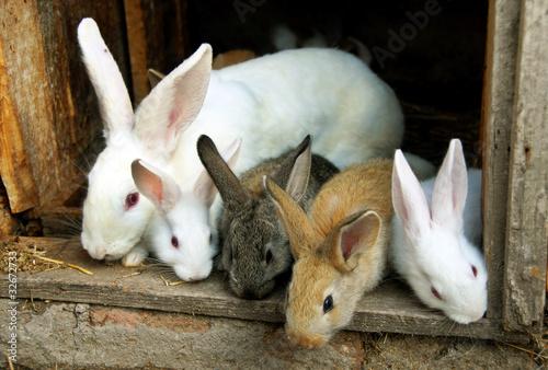 Fotografie, Obraz  Bunny Rabbits family