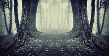 Symmetrical Photo Of A Secret Passage In A Mysterious Forest Fog