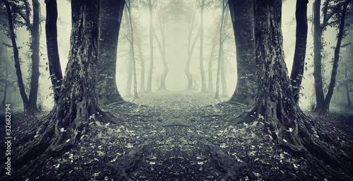 tajemnicze-przejscie-w-lesie