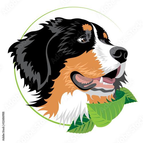 Bernese mountain dog Wallpaper Mural