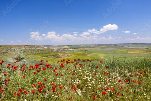 Tierra de Campos (Palencia)