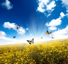 Yellow Field With Butterfly