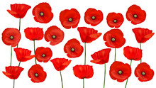 Background With Beautiful Red Poppies. Vector Illustration