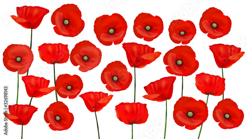 fototapeta na ścianę Background with beautiful red poppies. Vector illustration