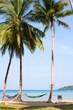 Tropical beach with coconut palm . Thailand