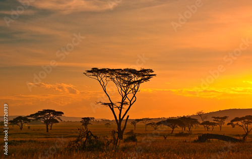 Poster Afrique African sunset in the Serengeti National Park, Tanzania