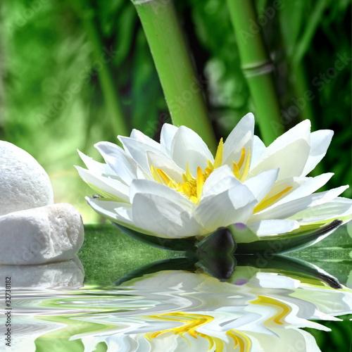 Keuken foto achterwand Waterlelies Seerose