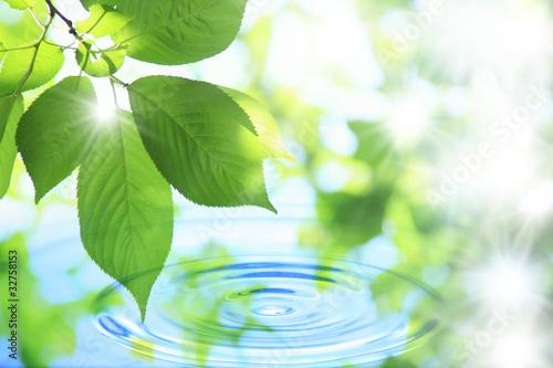 Nowoczesny obraz na płótnie Liście z rosą na tle wody